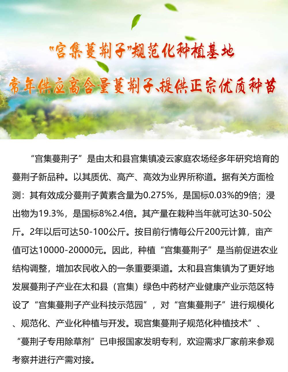 宫集蔓荆子规范化种植基地-常年供应高含量蔓荆子、提供正宗优质种苗